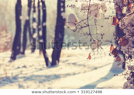 tél · csodaország · gyönyörű · hó · fedett · természetes - stock fotó © maisicon