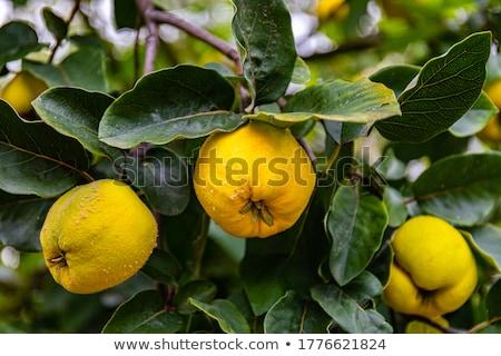 マルメロ · 果物 · キッチン · リンゴ · フルーツ - ストックフォト © zhekos