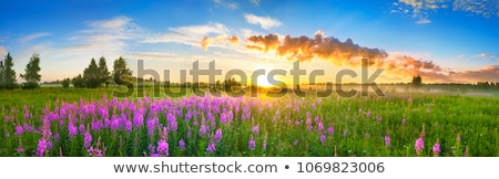 Stock photo: Summer evening on a green meadow