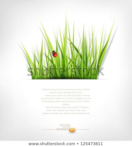 piros · katicabogár · zöld · fű · izolált · fehér · tavasz - stock fotó © mcherevan