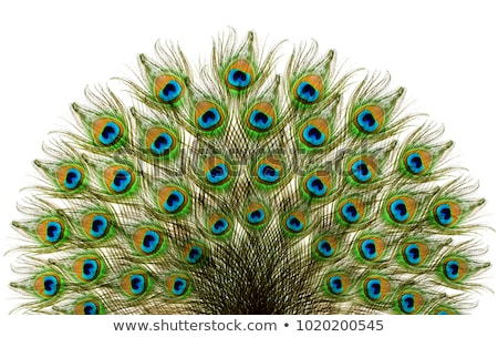 Abstract artistiek pauw veer Stockfoto © pathakdesigner