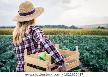 Hasat sebze soğan kırmızı sonbahar Stok fotoğraf © ryhor