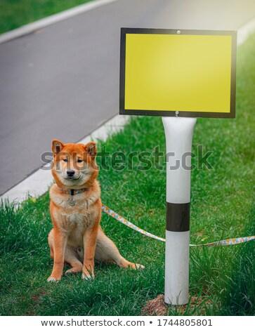 Cane pilastro cane marrone pietra parco Foto d'archivio © rhamm