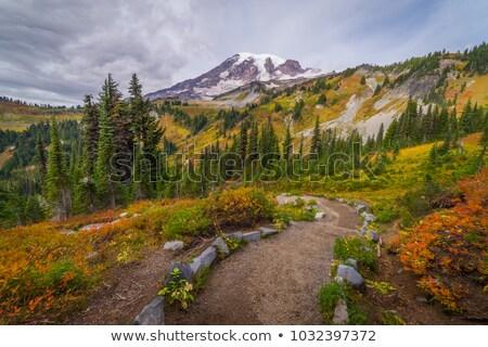 Vadvirágok Mount Saint Helens park Washington piros narancs Stock fotó © billperry
