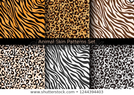 seamless cow zebra panther tiger animal skin pattern stock photo © creative_stock