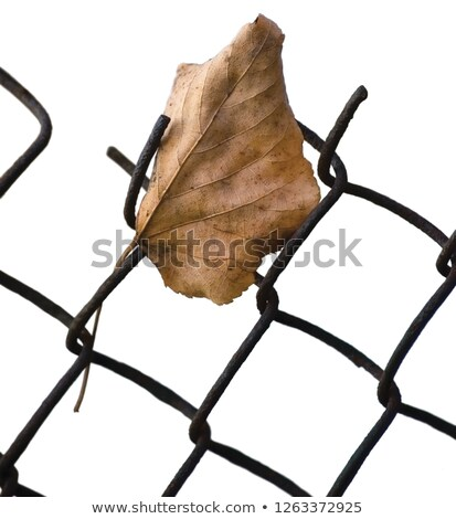 yellow autumn linden lime tree leaf caught on wire Stock photo © ultrapro