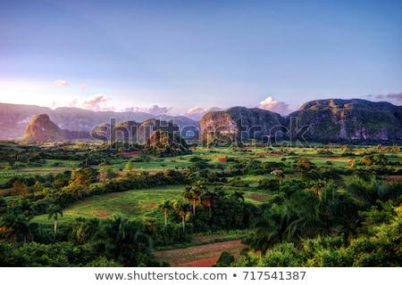 dohány · ültetvény · völgy · Kuba · unesco · világ - stock fotó © serpla