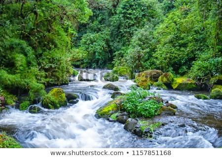 Fiume foresta Costarica natura panorama Foto d'archivio © bmonteny