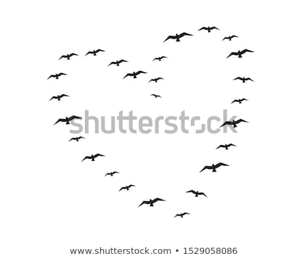 flying birds heart vector stock photo © beaubelle