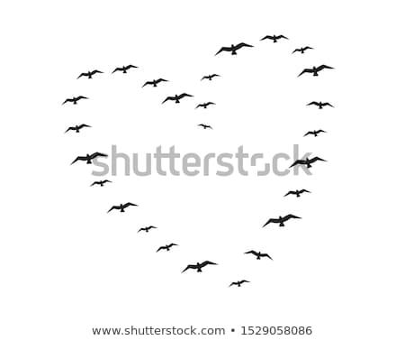 Foto stock: Voador · aves · coração · vetor · forma · de · coração · gaiola