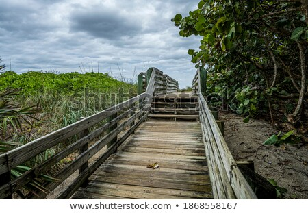 wooden walkway leading to the beach over sand dunes stock photo © discovod