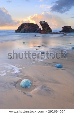 Bleu sunrise crique venimeux méduse up Photo stock © lovleah