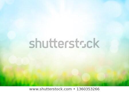abstract sunny background. stock photo © trinochka