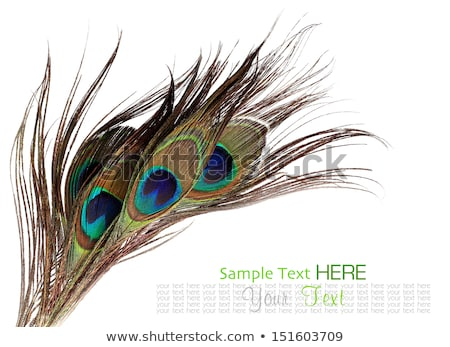 Peacock with beautiful feathers Stock photo © Sportactive
