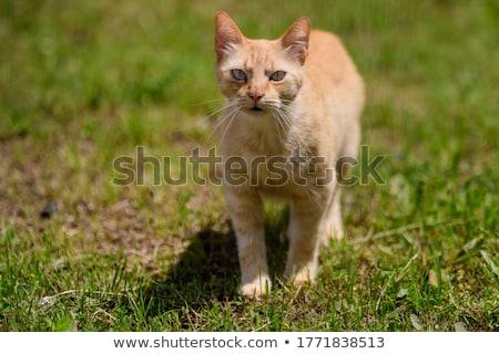 Alley cat Stock photo © ivonnewierink