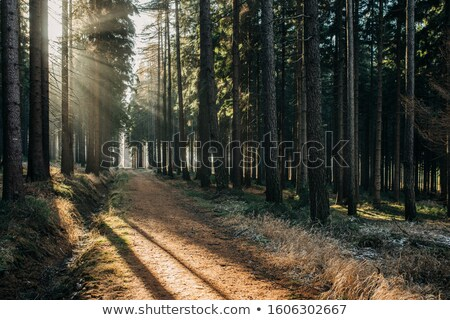 пути · зима · лес · ведущий · сумерки - Сток-фото © kotenko