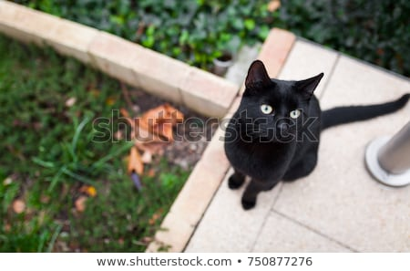 Gato preto sessão terreno cara parede olhos Foto stock © vapi
