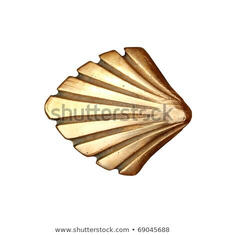 metal shell isolated on white Stock photo © shutswis