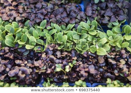 zöld · friss · köteg · fehér · legjobb · egészséges - stock fotó © mcherevan
