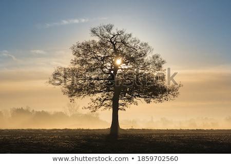 dąb · sylwetka · czarno · białe · tekstury · drzewo - zdjęcia stock © mady70