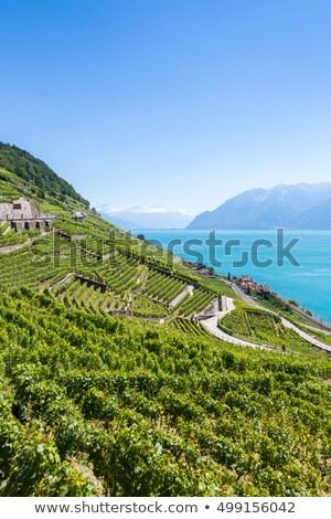 Stock fotó: Vineyards Of The Lavaux Regionswitzerland
