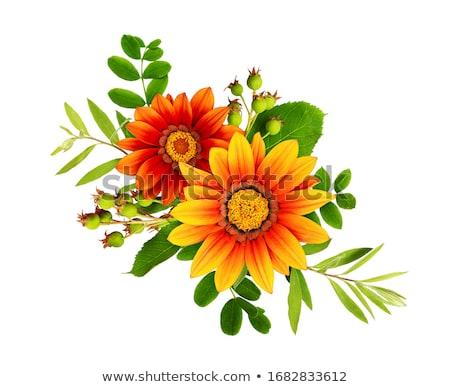 Composite image of yellow flowers stock photo © wavebreak_media