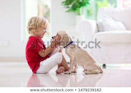 cão · de · caça · retriever · caçador · homem - foto stock © racoolstudio