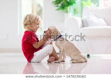 Foto stock: Dog On The Floor