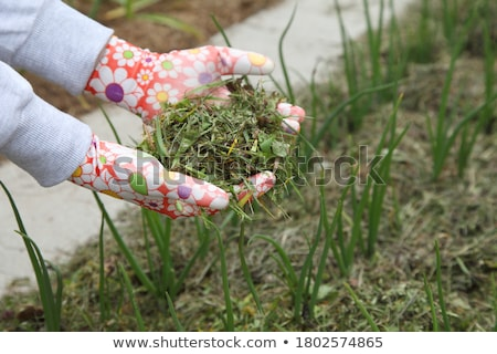 Young plant growing on dry soil with green background under the  Stock photo © Yatsenko