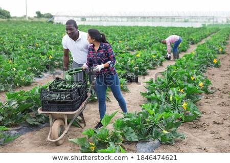 Afrika kadın itme el arabası bitki bahçıvan Stok fotoğraf © RAStudio