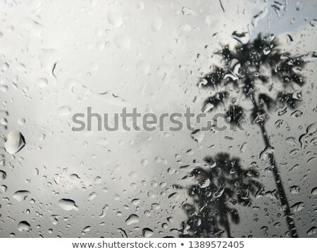 raindrops on window and view of palm trees stock photo © is2