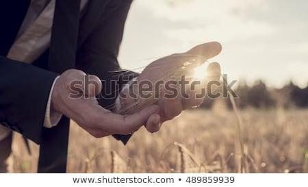 üzletember búzamező égbolt étel búza siker Stock fotó © IS2
