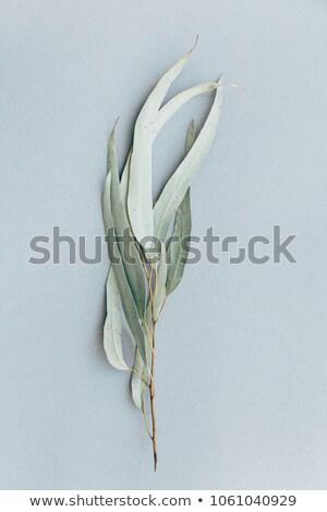 Pozostawia kory biały drzewo tle lata Zdjęcia stock © bdspn