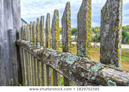 Country house territory with green lawn and fence Stock photo © bezikus