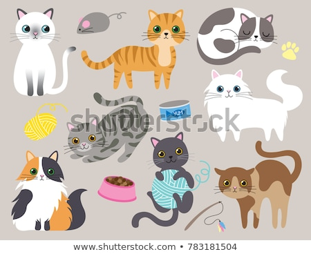 Conjunto diferente gatos isolado branco gato Foto stock © DeCe