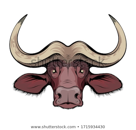 african cape buffalo stock photo © lienkie
