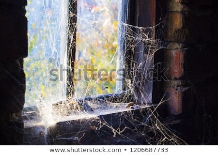 öreg ablak pókháló körül sötétség bent Stock fotó © romvo