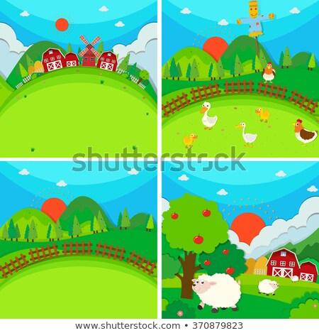Cztery gospodarstwa jabłko drzew ilustracja niebo Zdjęcia stock © colematt