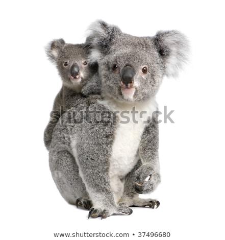 vriendelijk · koala · illustratie · aanbieden · knuffel · gelukkig - stockfoto © clairev