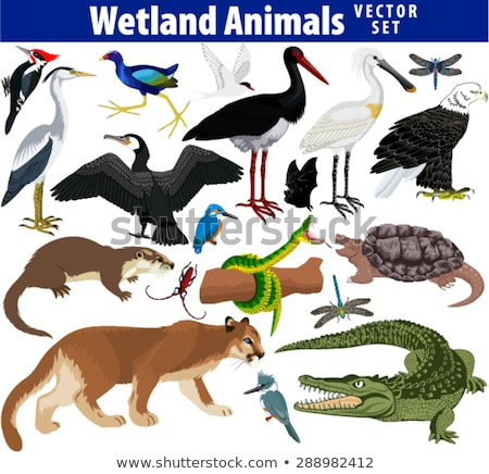 Set of nature swamp and animals Stock photo © bluering