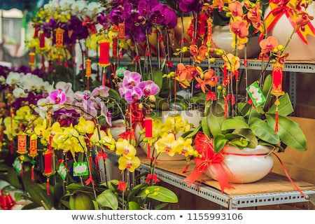 Yellow flowers in honor of the Vietnamese new year. Lunar new year flower market. Chinese New Year.  Stock photo © galitskaya