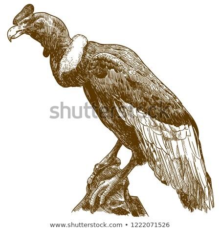Kuş yalıtılmış hayvanat bahçesi hayvan örnek Stok fotoğraf © cienpies