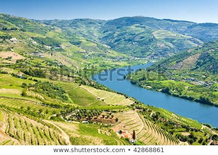 völgy · bor · régió · északi · Portugália · unesco - stock fotó © phbcz