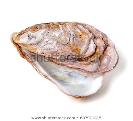 üres osztriga izolált fehér kagyló Stock fotó © ivonnewierink