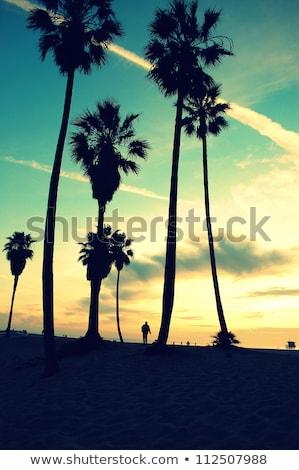 Palm trees at dawn in Waikiki Stock photo © backyardproductions