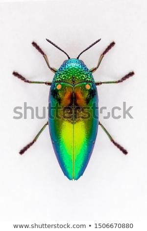 Jewel жук зеленый природы саду весны Сток-фото © sweetcrisis
