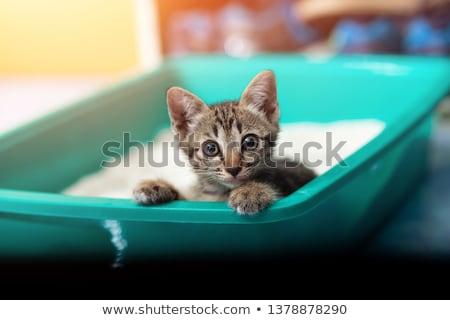 banheiro · recipiente · gato · fora · azul · plástico - foto stock © bayberry