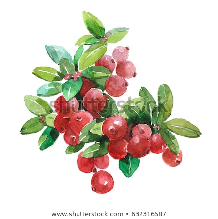 Dulce blanco beber frutas Foto stock © Masha