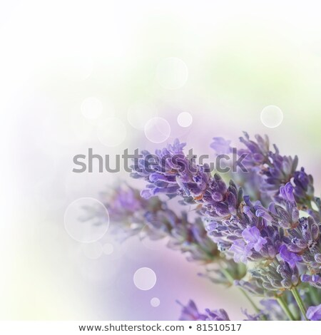 Lilac Over Wooden Background Photo stock © mythja
