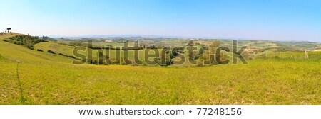 velden · Toscane · hemel · weg · wijn · natuur - stockfoto © bertl123